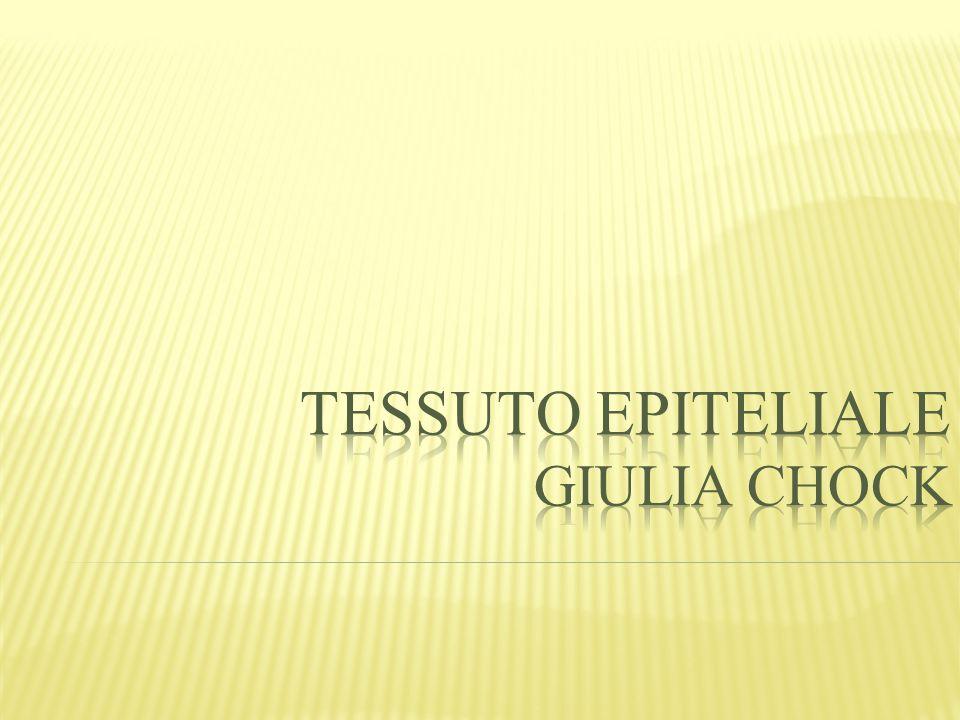 TESSUTO EPITELIALE Giulia Chock