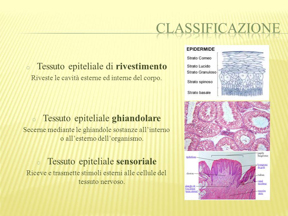 Classificazione Tessuto epiteliale di rivestimento