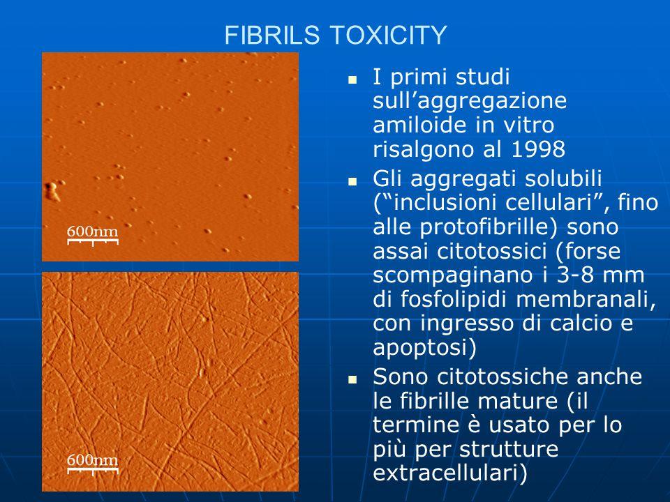 FIBRILS TOXICITY I primi studi sull'aggregazione amiloide in vitro risalgono al 1998.