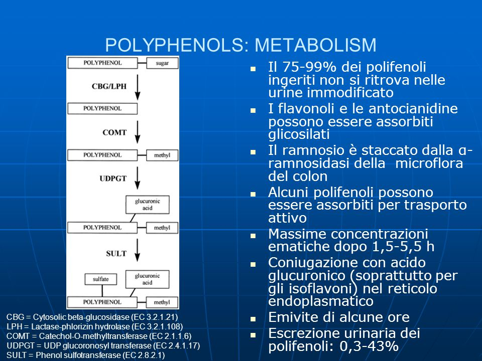 POLYPHENOLS: METABOLISM