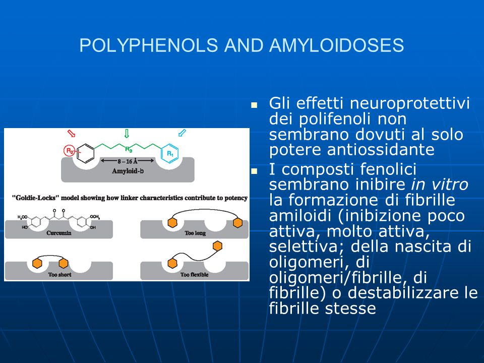 POLYPHENOLS AND AMYLOIDOSES