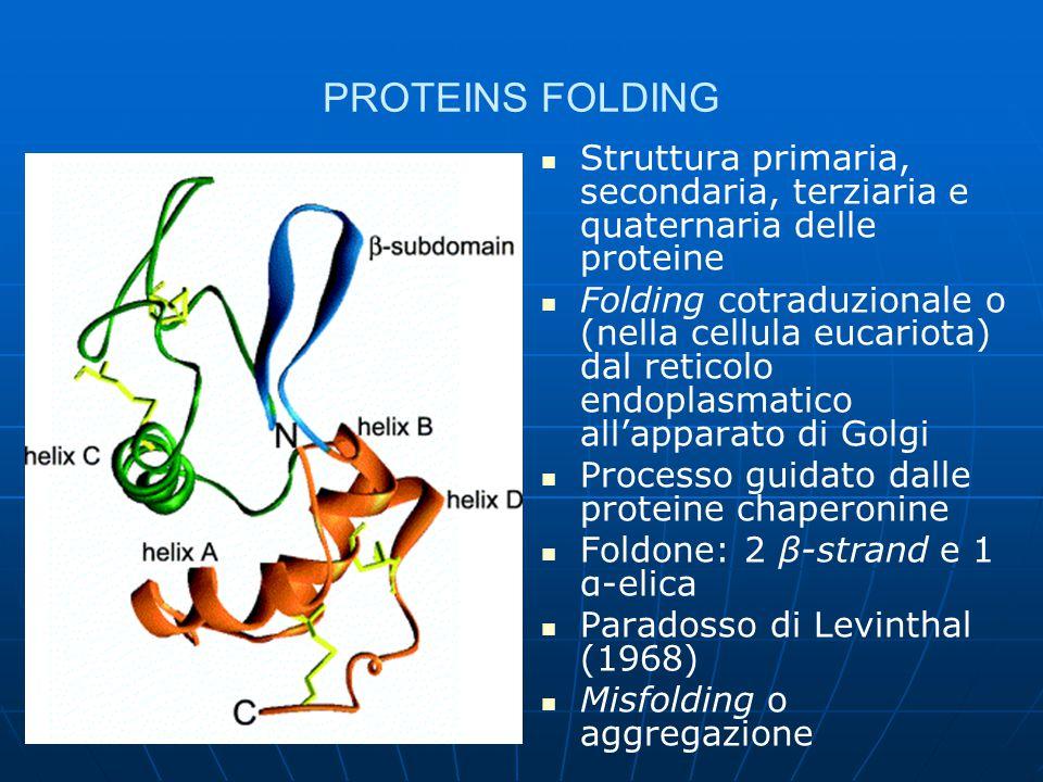 PROTEINS FOLDING Struttura primaria, secondaria, terziaria e quaternaria delle proteine.