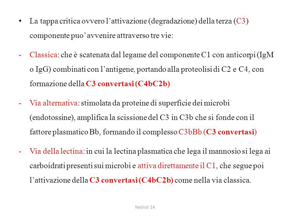 La tappa critica ovvero l'attivazione (degradazione) della terza (C3) componente puo' avvenire attraverso tre vie: