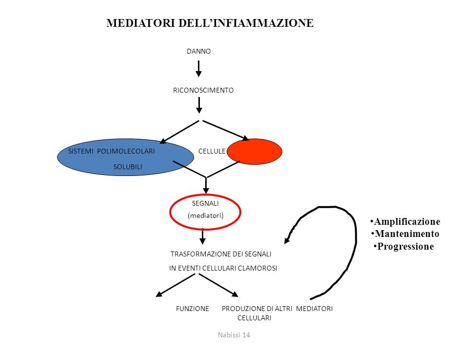 MEDIATORI DELL'INFIAMMAZIONE