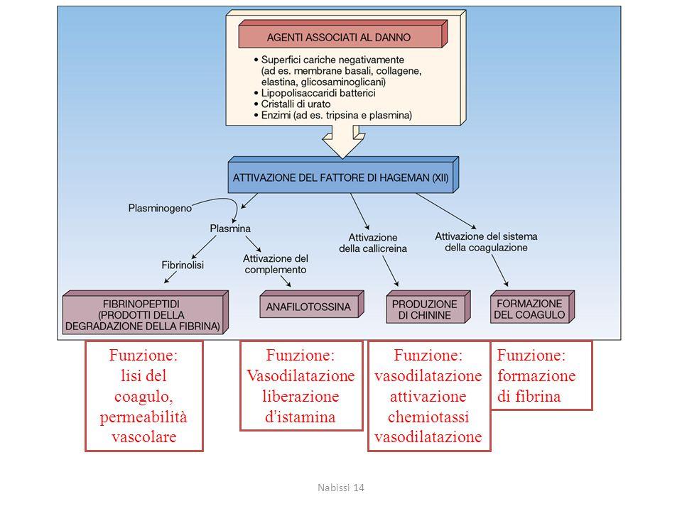 lisi del coagulo, permeabilità vascolare Funzione: