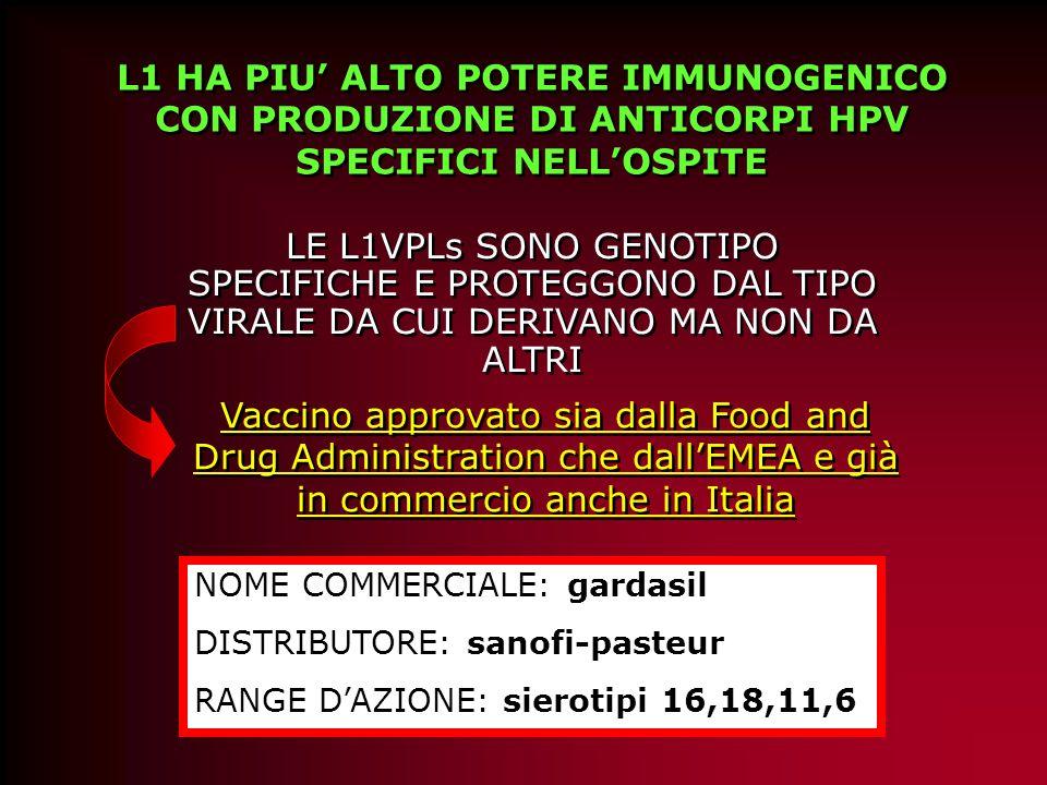 L1 HA PIU' ALTO POTERE IMMUNOGENICO CON PRODUZIONE DI ANTICORPI HPV SPECIFICI NELL'OSPITE