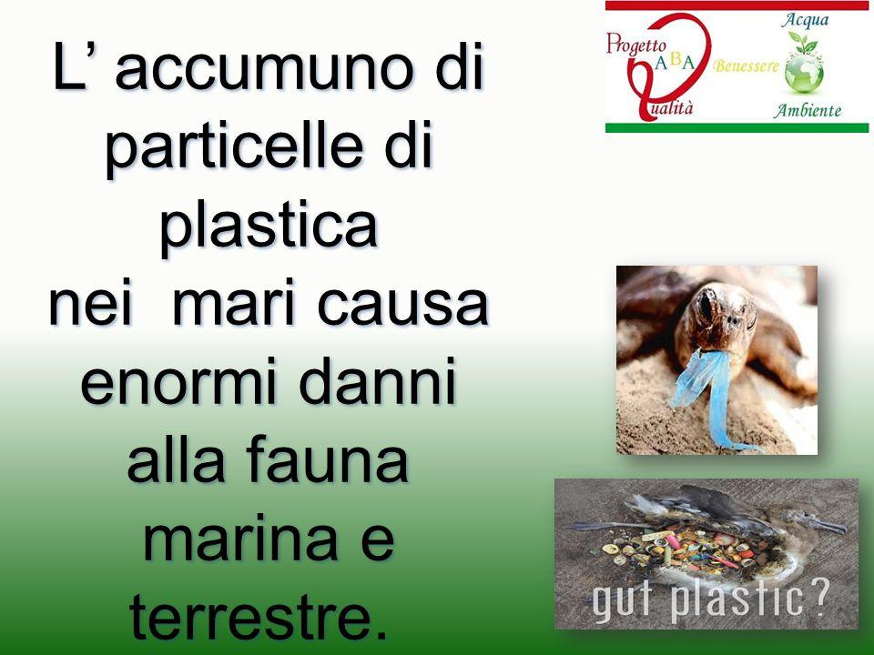 L' accumuno di particelle di plastica