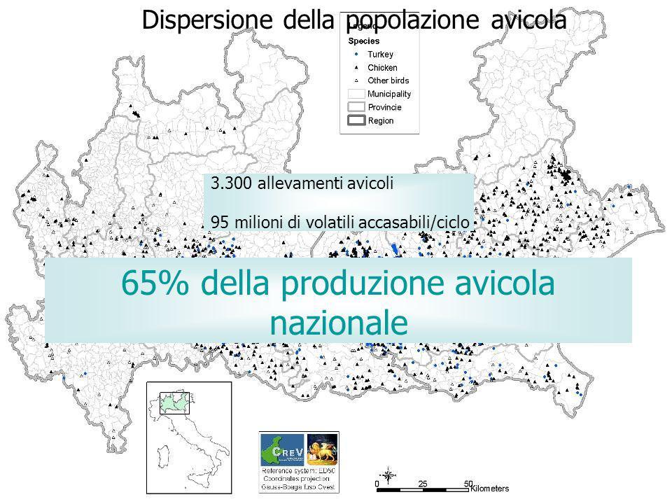 65% della produzione avicola nazionale
