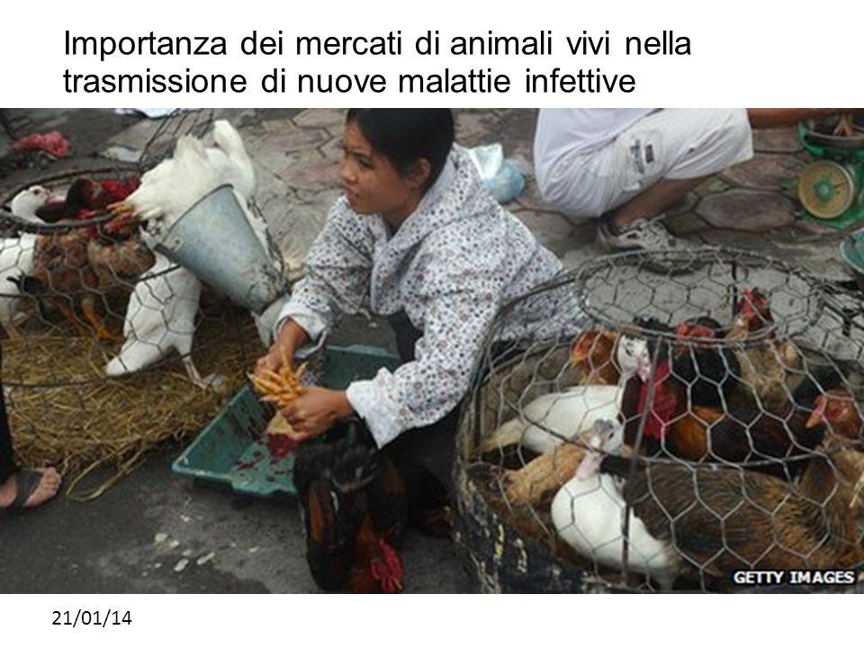 Importanza dei mercati di animali vivi nella trasmissione di nuove malattie infettive