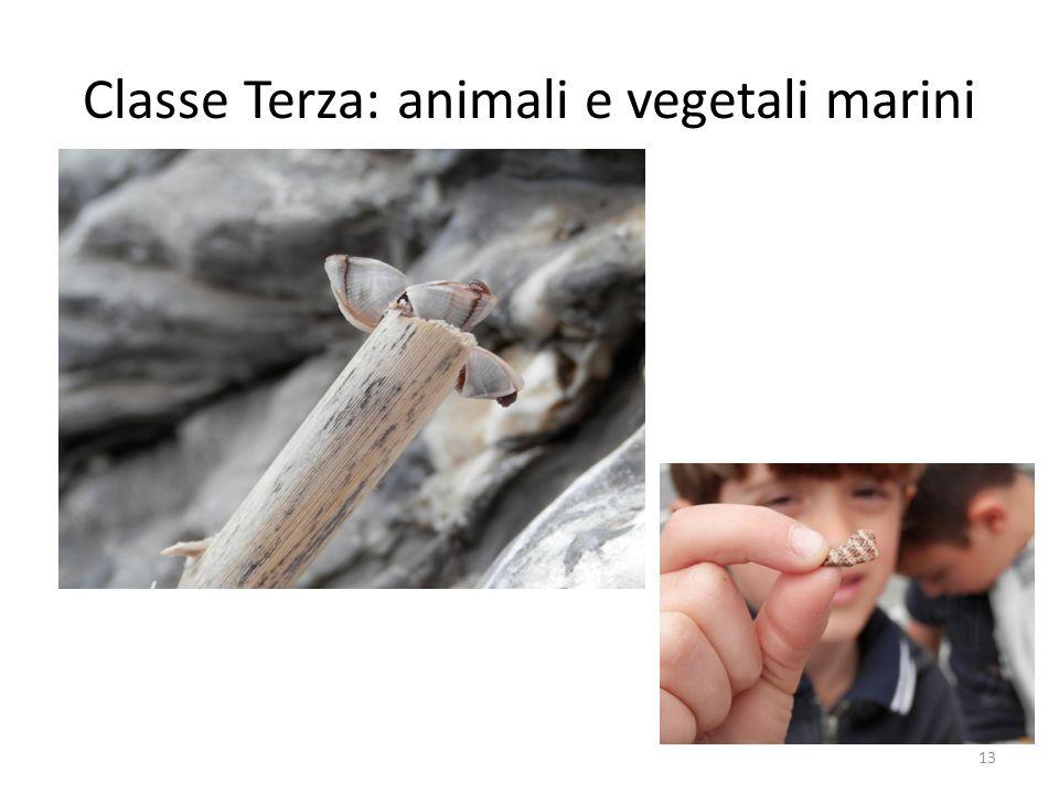 Classe Terza: animali e vegetali marini