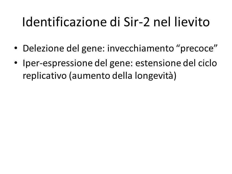 Identificazione di Sir-2 nel lievito