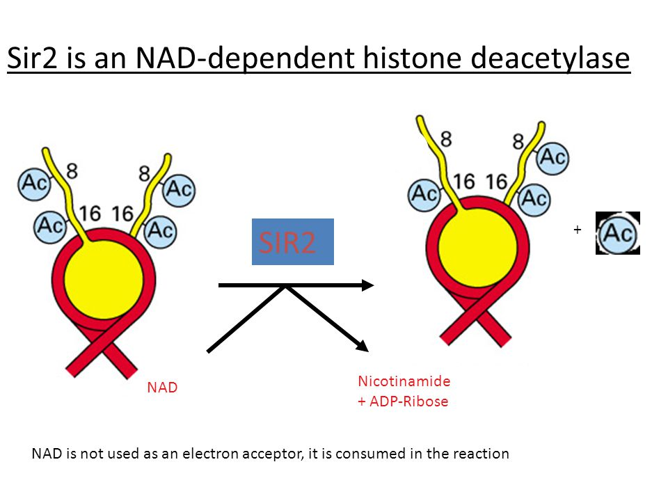 Sir2 is an NAD-dependent histone deacetylase