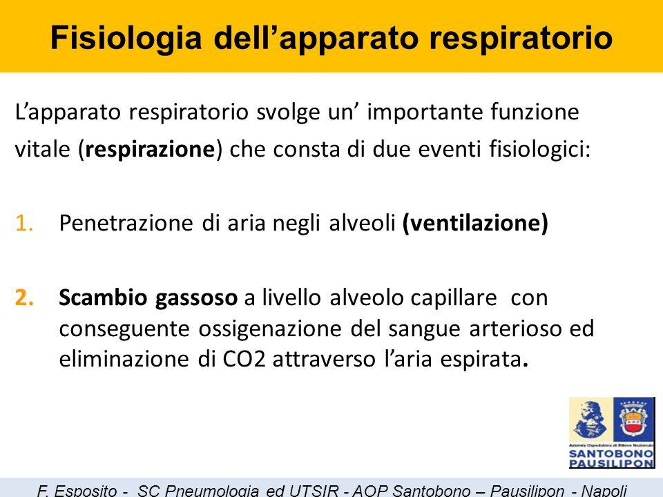 Fisiologia dell'apparato respiratorio