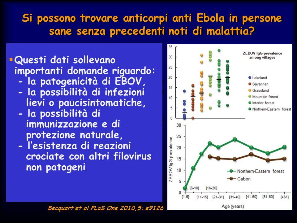 Si possono trovare anticorpi anti Ebola in persone sane senza precedenti noti di malattia