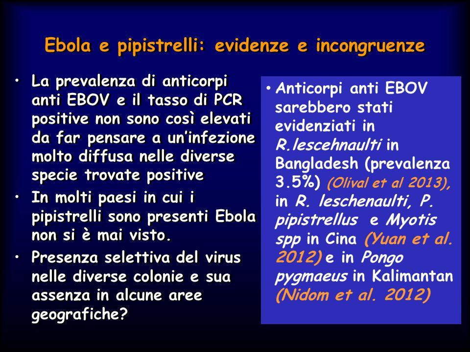Ebola e pipistrelli: evidenze e incongruenze