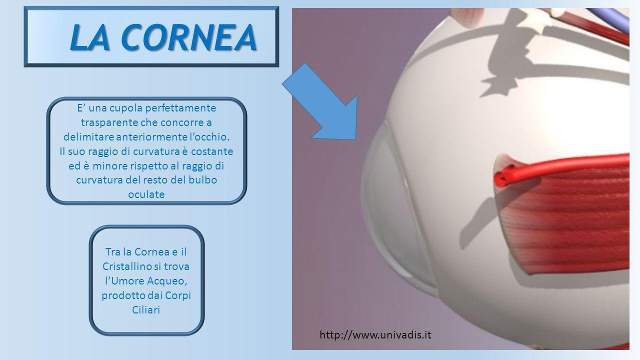 LA CORNEA E' una cupola perfettamente trasparente che concorre a delimitare anteriormente l'occhio.