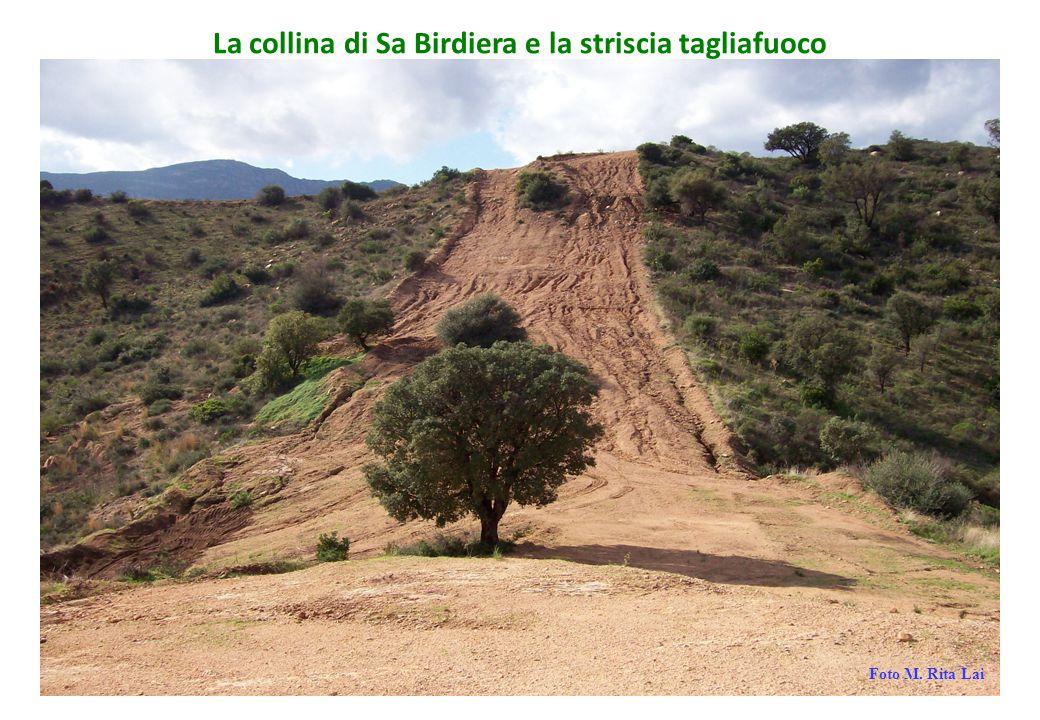 La collina di Sa Birdiera e la striscia tagliafuoco