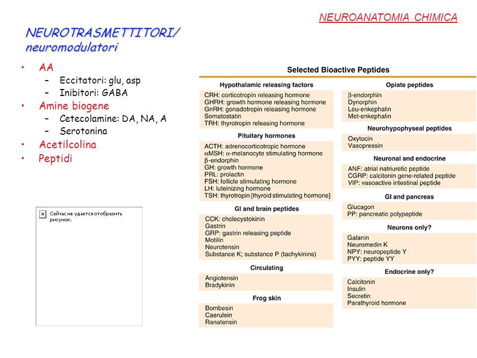 NEUROTRASMETTITORI/ neuromodulatori