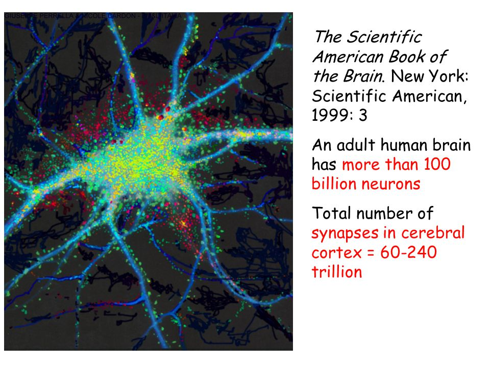 The Scientific American Book of the Brain