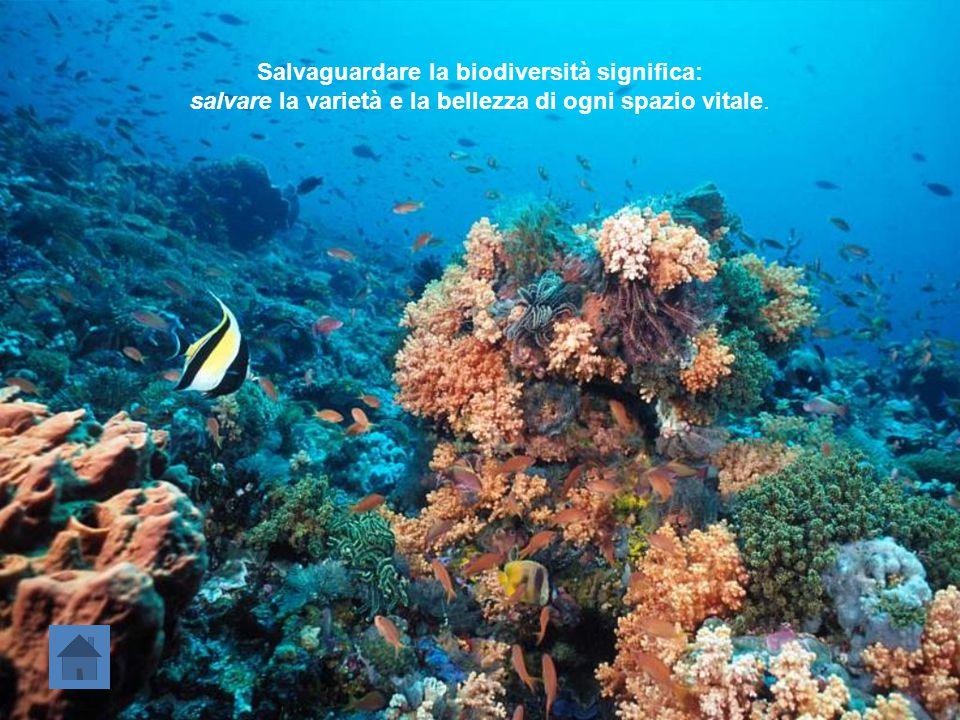 Salvaguardare la biodiversità significa: