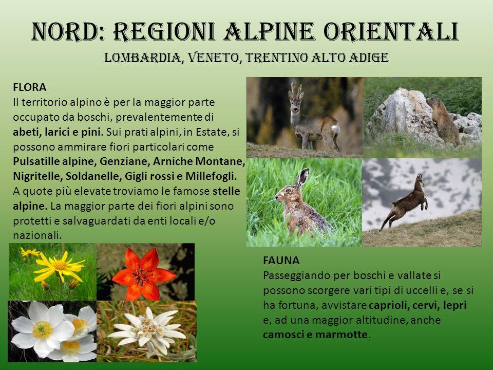 Nord: regioni alpine orientali