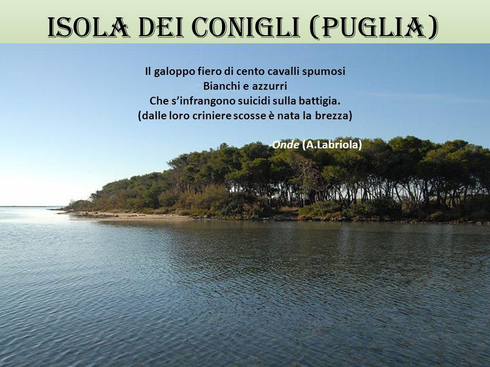 Isola dei conigli (Puglia)