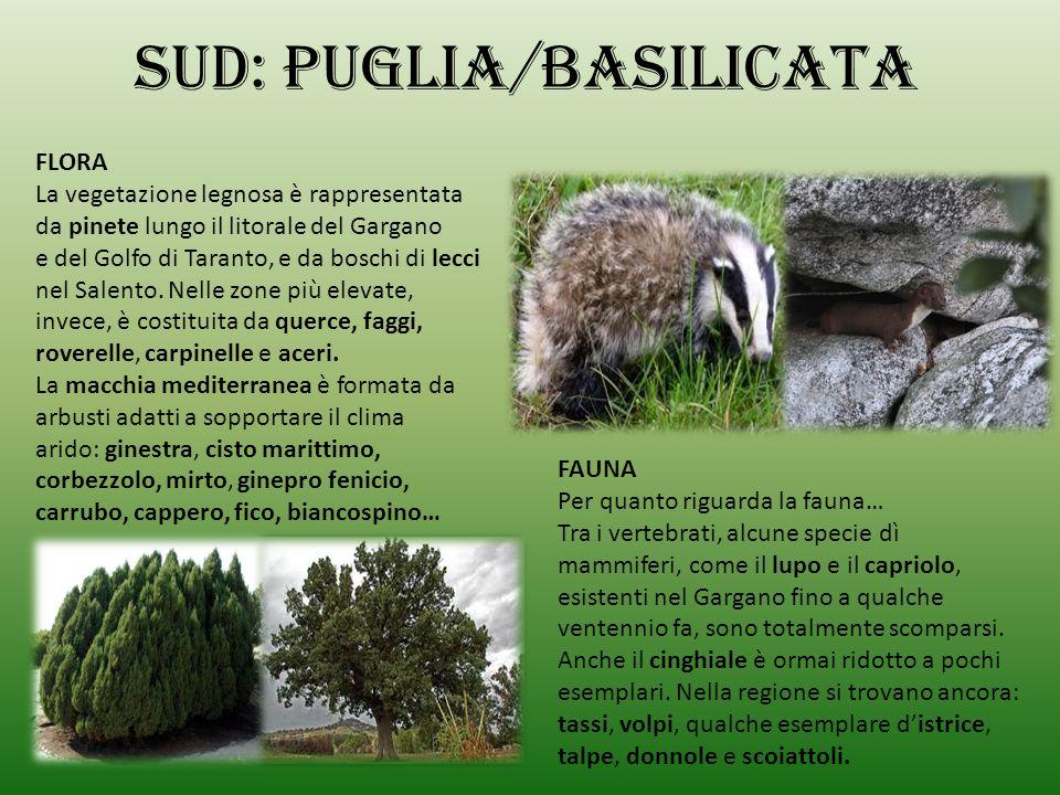 Sud: PUGLIA/BASILICATA