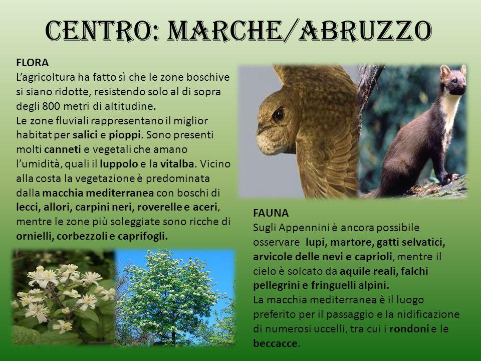CENTRO: MARCHE/ABRUZZO
