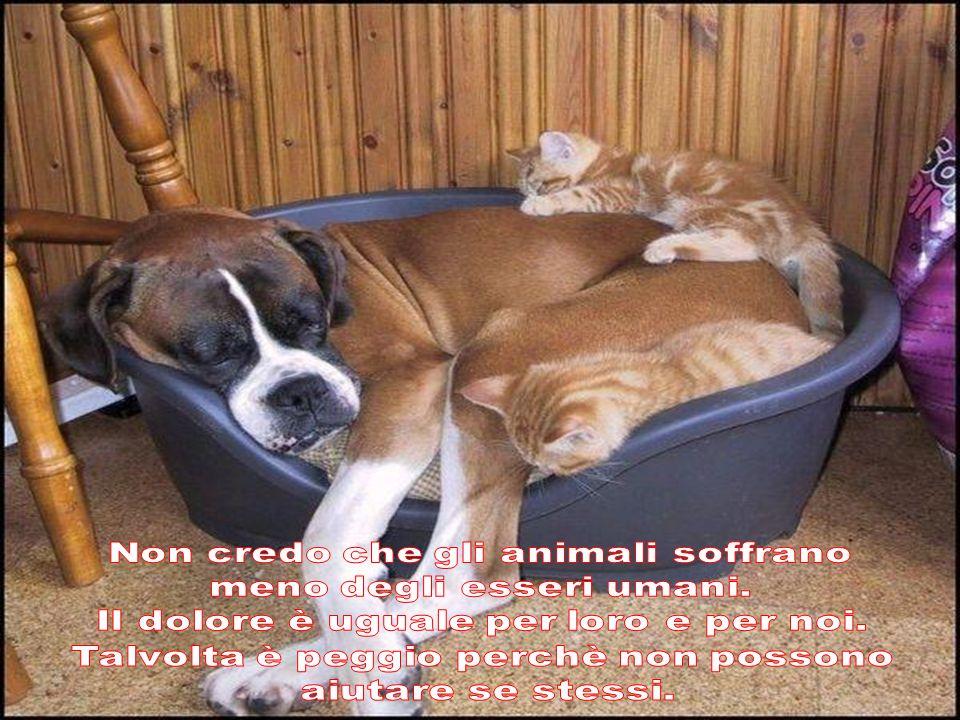 Non credo che gli animali soffrano meno degli esseri umani.