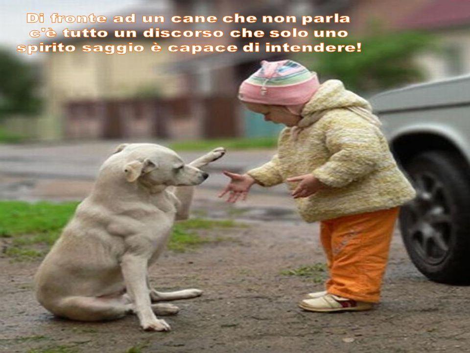 Di fronte ad un cane che non parla c è tutto un discorso che solo uno