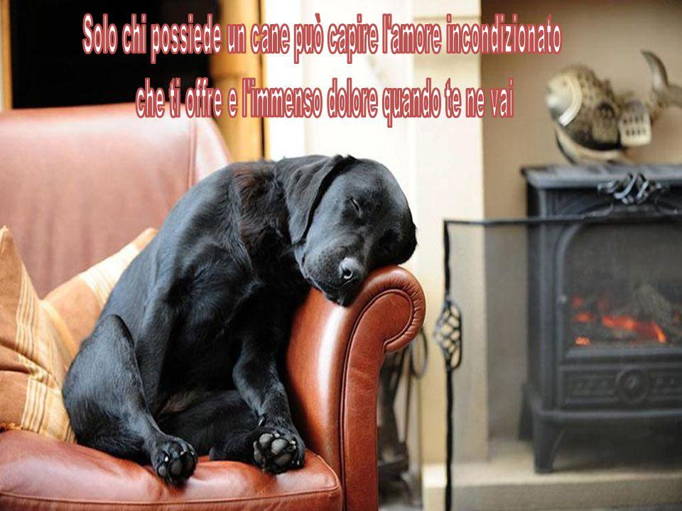 Solo chi possiede un cane può capire l amore incondizionato