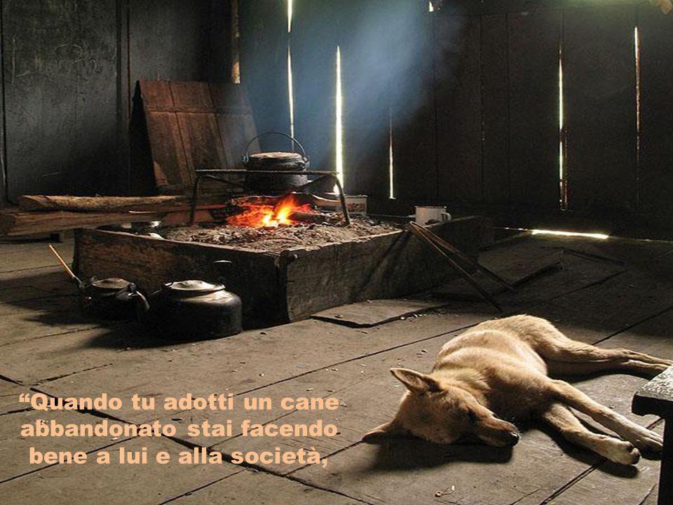 Quando tu adotti un cane abbandonato stai facendo bene a lui e alla società,