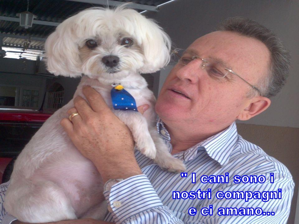 I cani sono i nostri compagni e ci amano...
