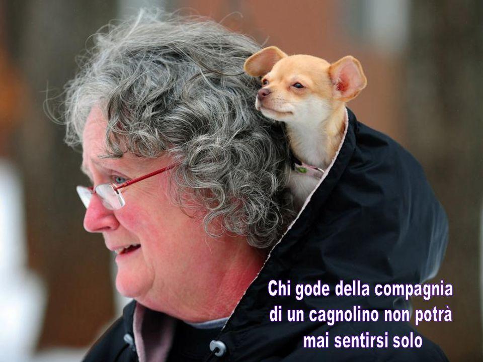 Chi gode della compagnia di un cagnolino non potrà mai sentirsi solo