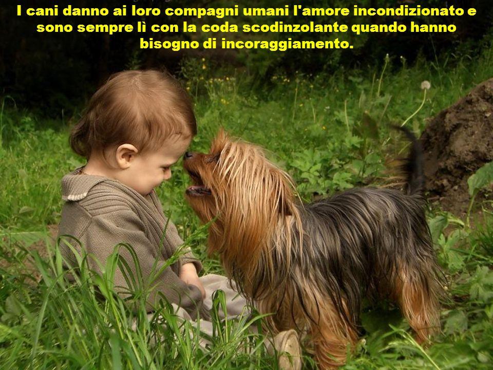 I cani danno ai loro compagni umani l amore incondizionato e sono sempre lì con la coda scodinzolante quando hanno bisogno di incoraggiamento.