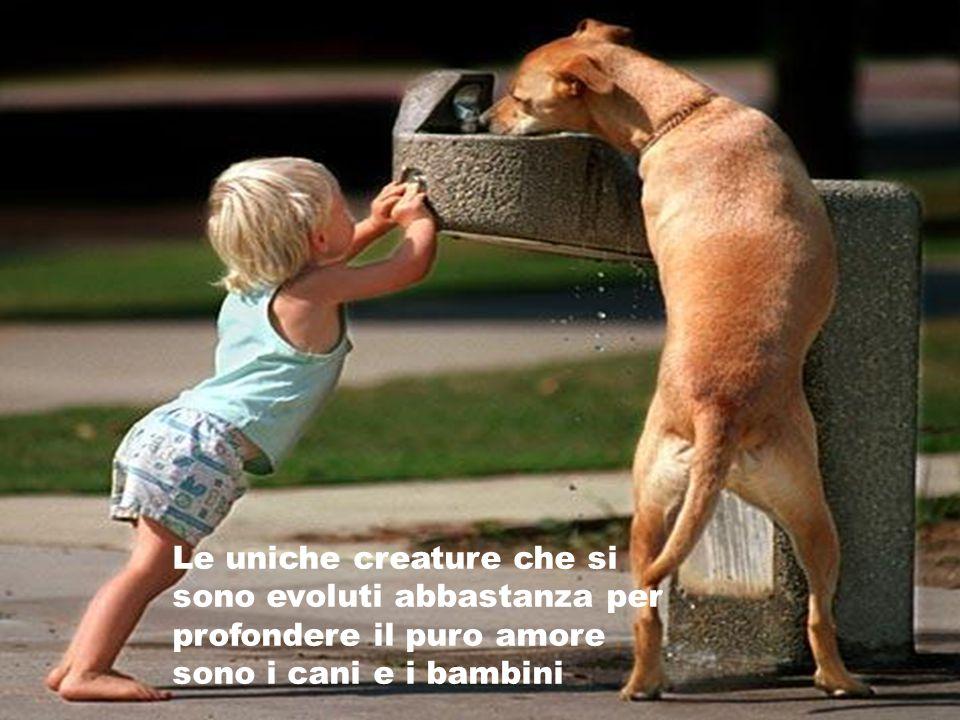 Le uniche creature che si sono evoluti abbastanza per profondere il puro amore sono i cani e i bambini