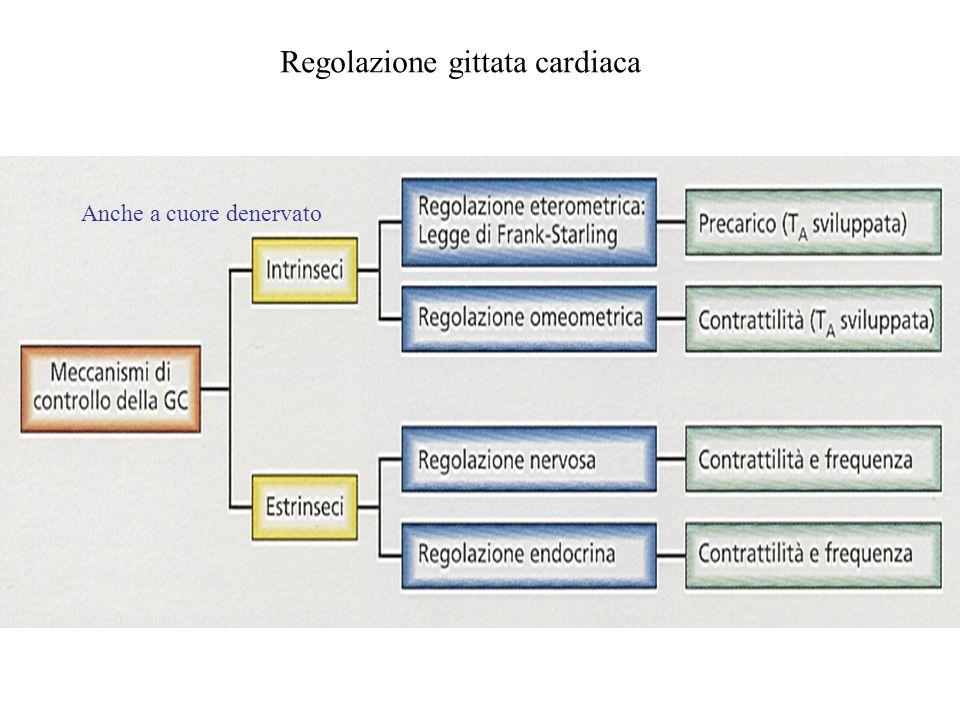 Regolazione gittata cardiaca