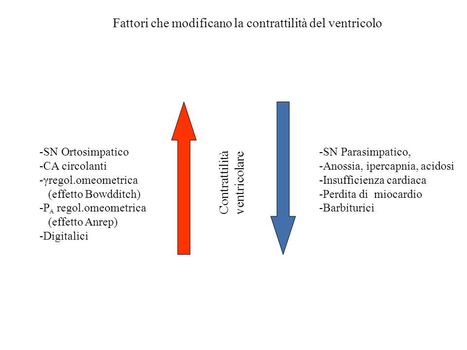 Fattori che modificano la contrattilità del ventricolo