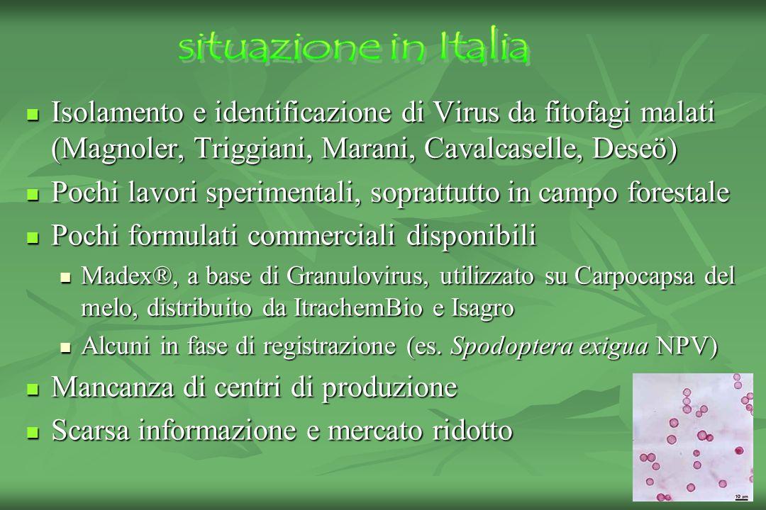 situazione in Italia Isolamento e identificazione di Virus da fitofagi malati (Magnoler, Triggiani, Marani, Cavalcaselle, Deseö)