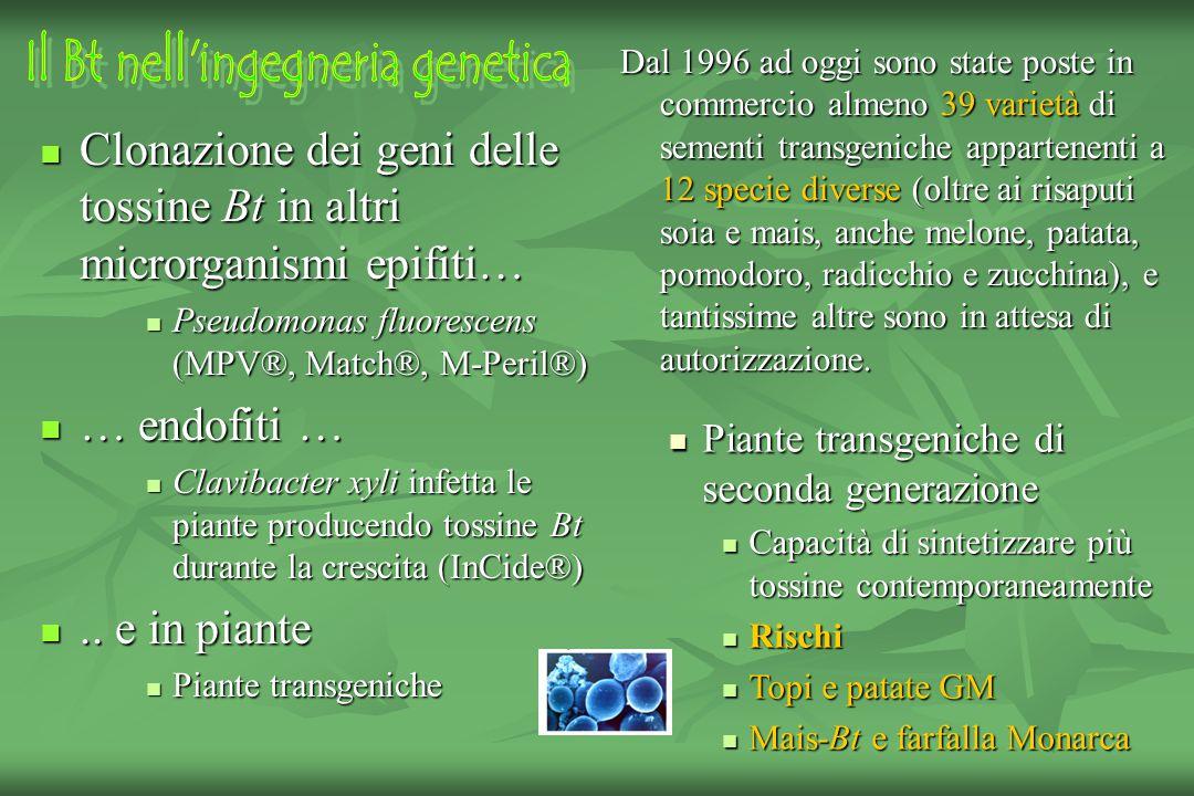 Il Bt nell ingegneria genetica