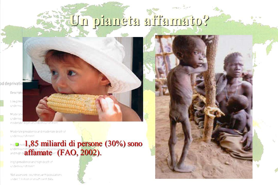 Un pianeta affamato 1,85 miliardi di persone (30%) sono affamate (FAO, 2002).