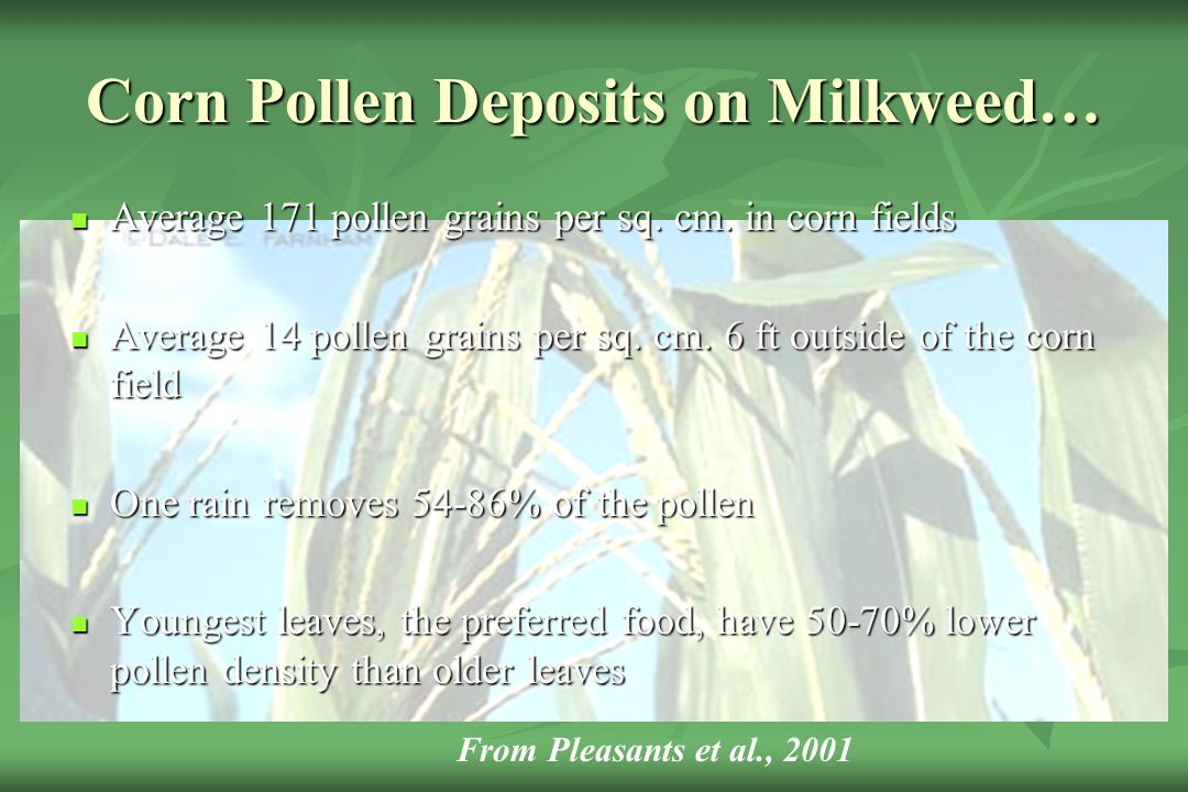 Corn Pollen Deposits on Milkweed…