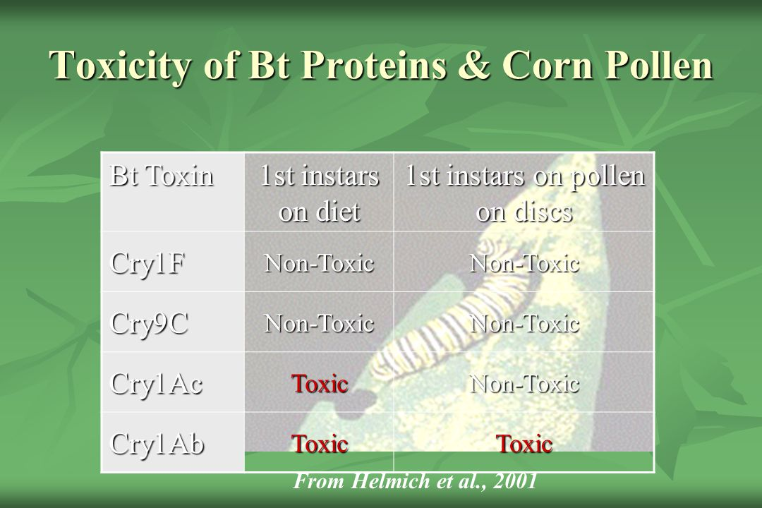 Toxicity of Bt Proteins & Corn Pollen