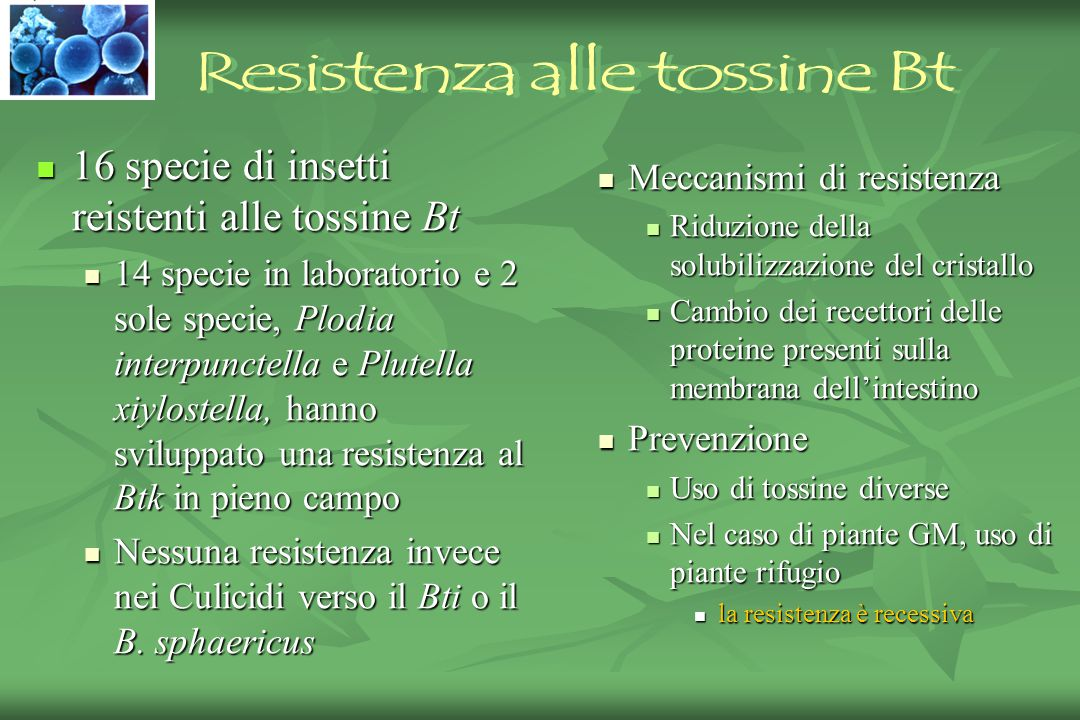 Resistenza alle tossine Bt