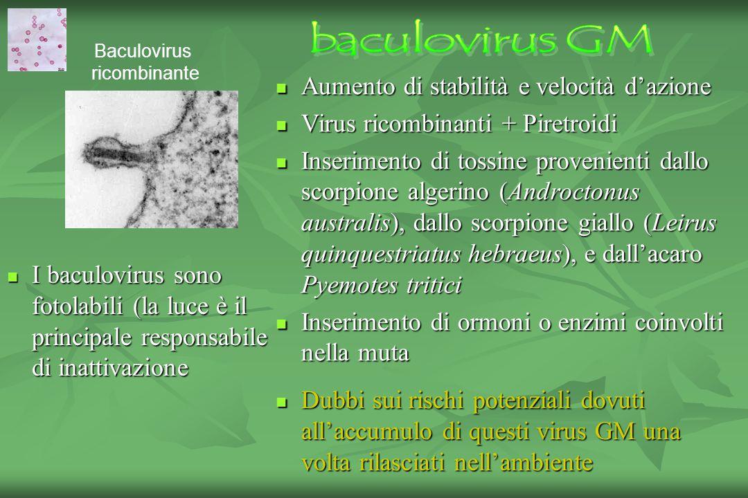 baculovirus GM Aumento di stabilità e velocità d'azione