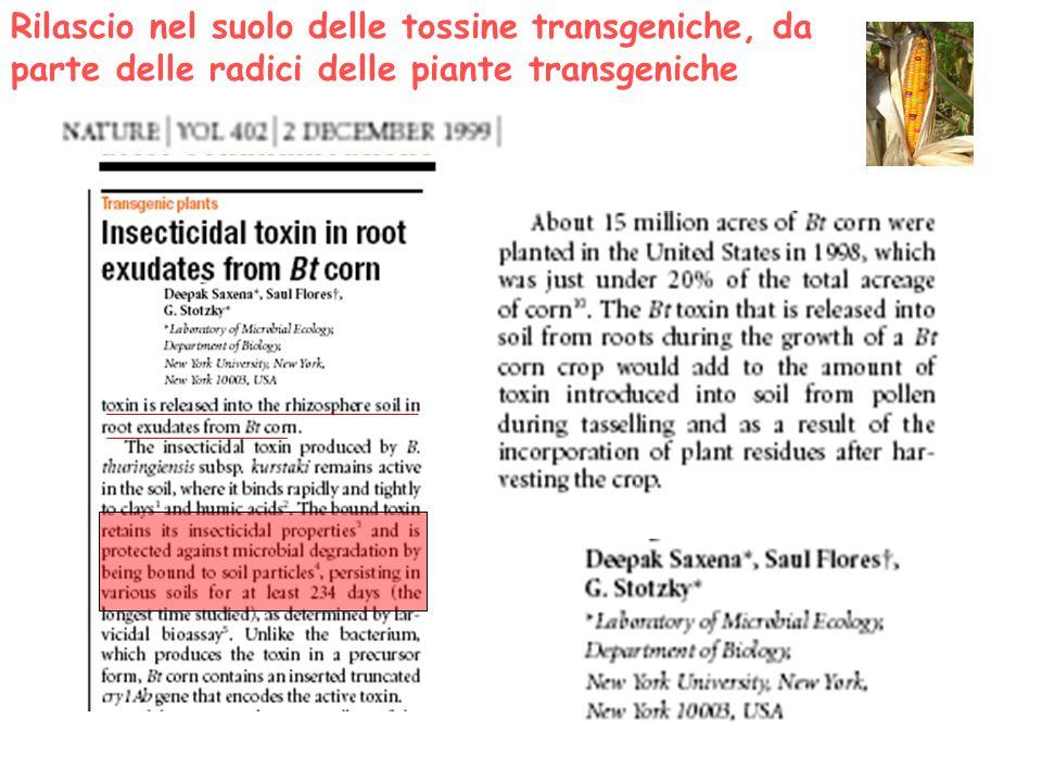 Rilascio nel suolo delle tossine transgeniche, da parte delle radici delle piante transgeniche