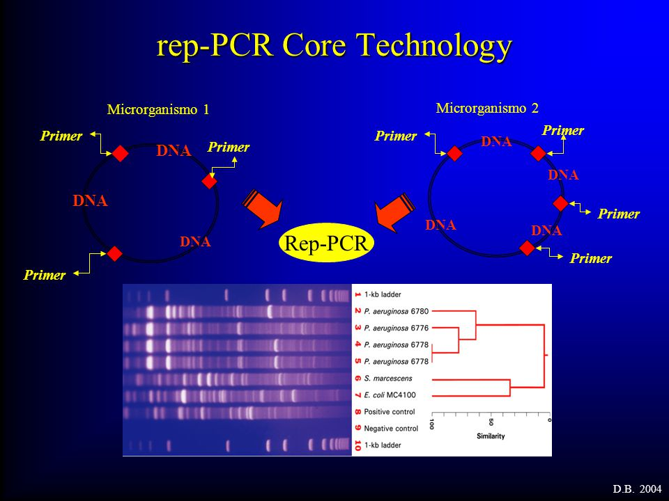 rep-PCR Core Technology