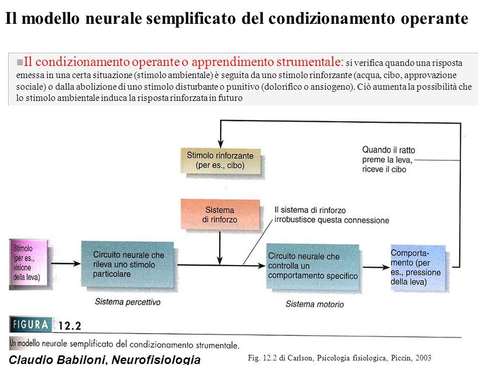 Il modello neurale semplificato del condizionamento operante