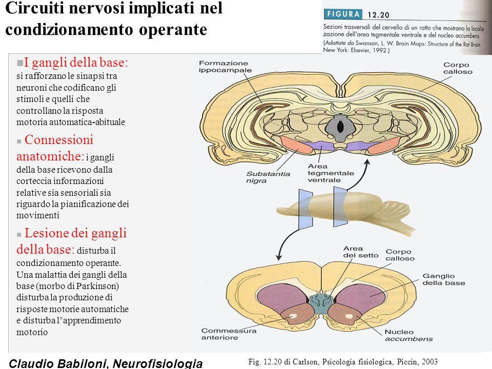 Circuiti nervosi implicati nel condizionamento operante