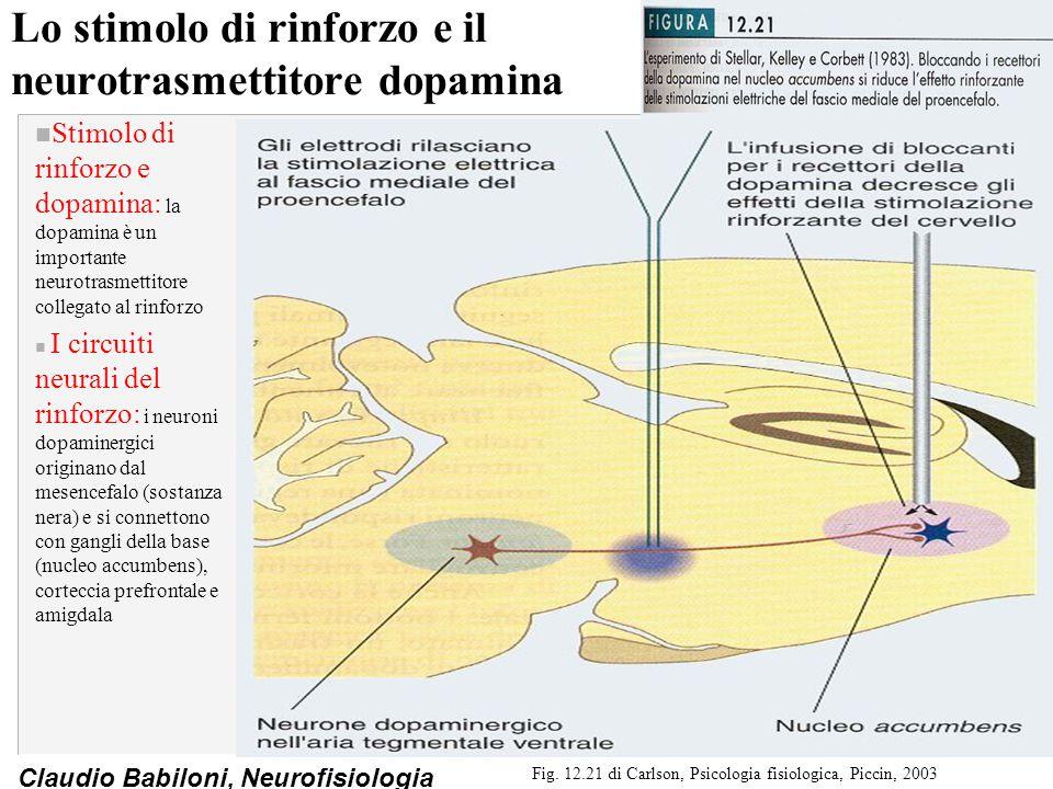 Lo stimolo di rinforzo e il neurotrasmettitore dopamina